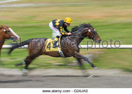Panned image of Jockey Denis Aroujo riding Similkameen Joey during Race 3 Claiming at the Hastings Racecourse in - Stock Photo
