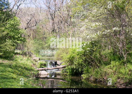 Forest, stream, lake and small waterfall in Prospect Park, Brooklyn, New York, USA - Stock Photo