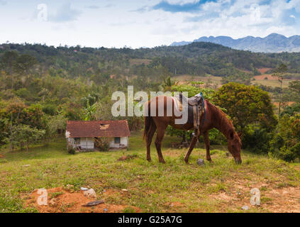 Grazing horse in Vinales, Pinar del Rio, Cuba - Stock Photo