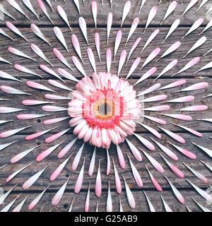 Pink Gerbera Flower petal pattern on wooden table - Stock Photo