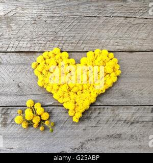 Yellow heart made from wattle flowers - Stock Photo