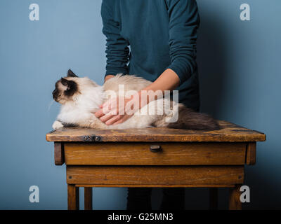 A cat is being informally examind by a vet on a wooden desk - Stock Photo