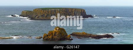 Larry Bane Head and Sheep island sea bird breeding colony near Ballintoy County Antrim Northern Ireland - Stock Photo