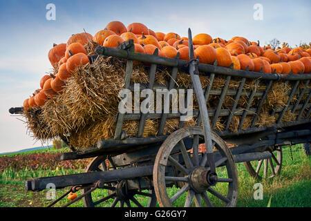 pumpkins on a wooden ladder cart - Stock Photo