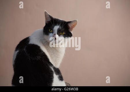 Black and white cat with yellow eyes - Stock Photo