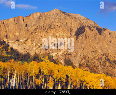 USA, Colorado, Gunnison National Forest, Raggeds Wilderness, Sunset on Marcellina Mountain and autumn aspen in the - Stock Photo