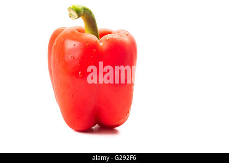 Big fresh red pepper with water drops isolated on white background. - Stock Photo