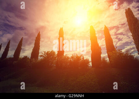 Cypress valley at sunset, Tuscany, Italy - Stock Photo