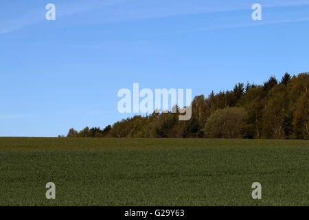 Wiese am Waldrand im Frühling  Meadow near the forest in spring - Stock Photo