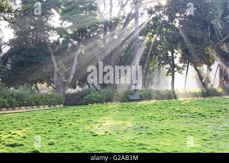 Tranquil scene of morning sun rays piercing through trees and mist - Stock Photo
