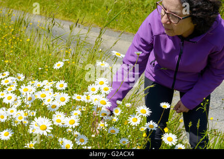 a hiker woman picking daisies in a meadow - Stock Photo