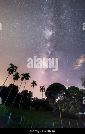 Milky way on top trees in Penang - Stock Photo