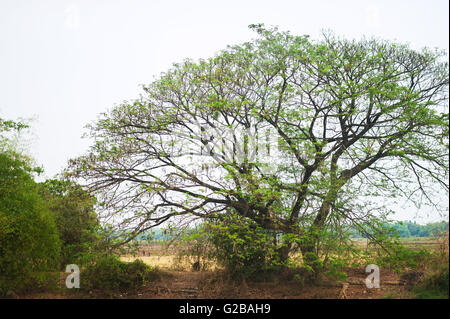 An Big tree in nature place with sun light . - Stock Photo
