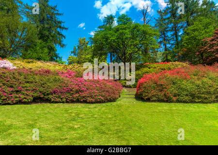 Beautiful flower garden in Virginia Water Park in Surrey, UK - Stock Photo