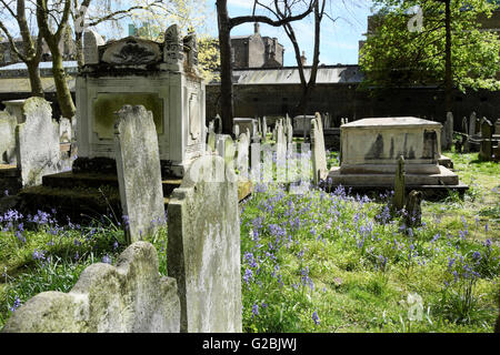 Graves tombstones and bluebells in spring graveyard in Bunhill Cemetery City of London EC1 UK  KATHY DEWITT - Stock Photo