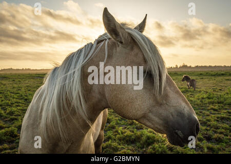Profile of a horse, close-up, with a mini horse in the background. - Stock Photo
