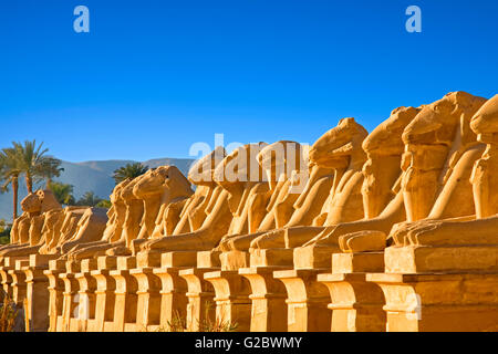The Avenue of Rams at Temple of Karnak in Luxor - Stock Photo