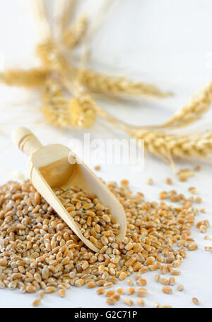 Ears of wheat and  wheat grains on white  background - Stock Photo