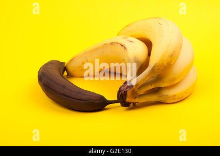 black rotten banana beside bunch of ripe bananas on yellow background - Stock Photo