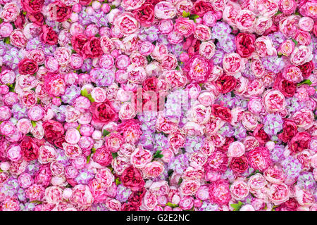 dense background of Red peonies - Stock Photo