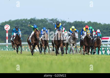 Makahiki (Yuga Kawada), MAY 29, 2016 - Horse Racing : Makahiki (C) ridden by Yuga Kawada wins the Tokyo Yushun (Japanese - Stock Photo