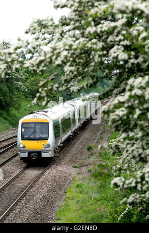 Warwickshire, England, UK. 30th May 2016. May blossom frames a Spring Bank Holiday Chiltern Railways service passing - Stock Photo