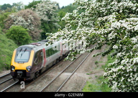 Warwickshire, England, UK. 30th May 2016. May blossom frames a Spring Bank Holiday Arriva Cross Country service - Stock Photo