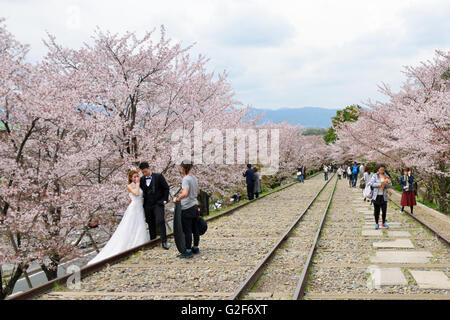 Cherry Blossom on the Keage Incline - Stock Photo