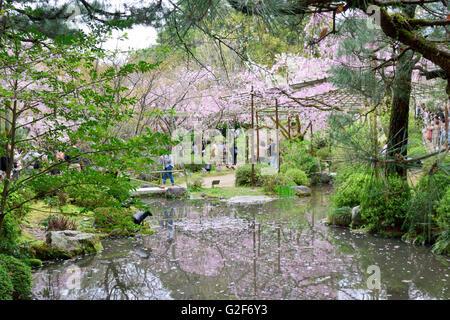 Cherry Blossom, Heian Shrine Gardens - Stock Photo