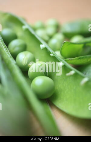 Peas in pods, being prepared for cooking, in England, UK - Stock Photo