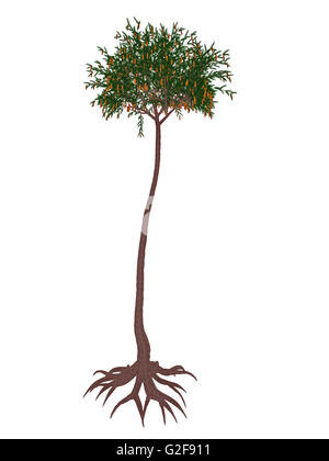 Lepidodendron prehistoric tree, isolated on white background. - Stock Photo
