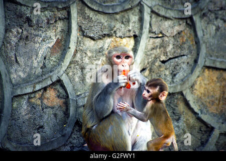 Portrait of Monkey mother and baby - Stock Photo