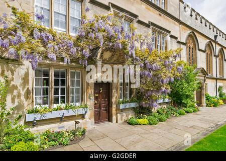 WISTERIA GROWING OVER A DOORWAY OF JESUS COLLEGE OXFORD - Stock Photo
