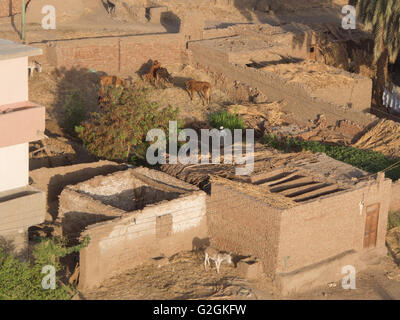 The stables and livestock enclosures beside homes on the West bank of the River Nile in Luxor, Egypt - Stock Photo