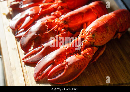 Cooked red Lobsters served on white plate ready for eating - Stock Photo