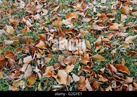 Autumn leaves on grass in city park (Southdale) Winnipeg Manitoba Canada - Stock Photo