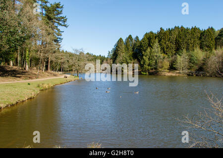 Mallards Pike Lake in the Forest of Dean - Stock Photo
