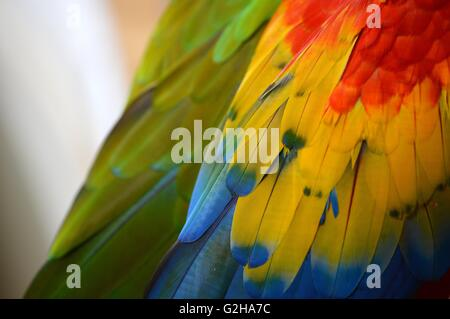 Close-Up of Macaw Feathers - Stock Photo