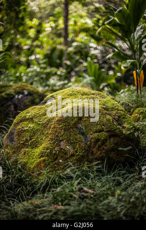 Large Rock Covered in Moss - Stock Photo