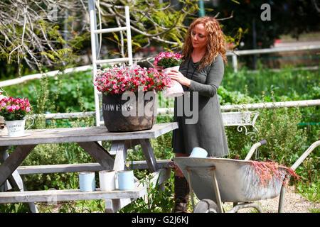 Woman works in her garden arranging flowers in a flowerpot - Stock Photo