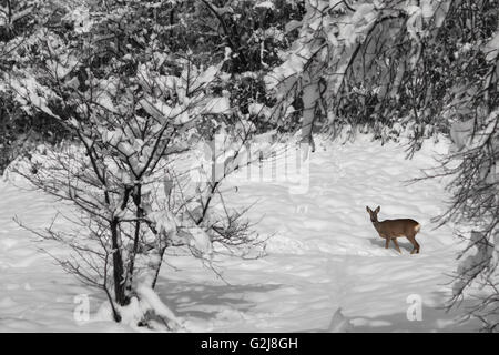 single small deer in a snow covered forest - Stock Photo