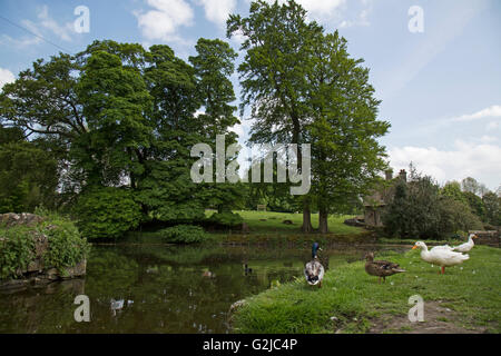 Duck pond in the village of Tissington in an area known as the Peak District in central England. - Stock Photo