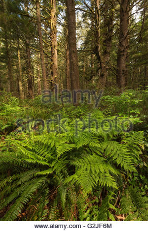 Undergrowth along the West Coast Trail on Vancouver Island, Pacific Rim National Park, British Columbia, Canada - Stock Photo