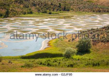 Spotted Lake in the South Okanagan Valley, British Columbia, Canada - Stock Photo