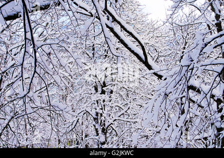 Snowy park with powdery fresh snow covering all the branches, Pärnu, Estonia - Stock Photo