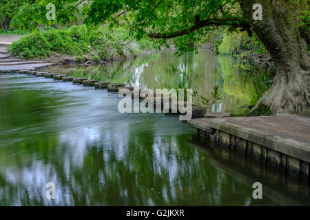 The Stepping Stones,Boxhill ,Surrey - Stock Photo