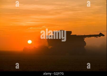 a combine harvester works in field of yellow field peas near Winnipeg,  Manitoba, Canada - Stock Photo