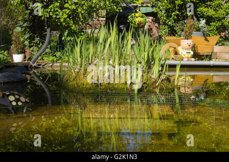 Natural garden with pond in summertime, European White Waterlily (Nymphaea alba), Purple Loosestrife (Lythrum salicaria) - Stock Photo