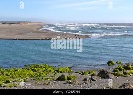 Mouth of the Smith River, Pacific ocean, harbor seals, sea lions, seagulls & double-crested cormorants resting on - Stock Photo