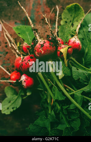 Freshly picked organic red radishes on wooden table, soil dirt on vegetables, selective focus - Stock Photo